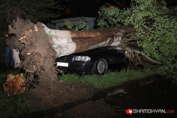 Երևանում հսկայական ծառը տապալվել է մեքենայի վրա