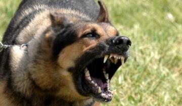 Ոստիկանները կրակել ու սպանել են շանը, որ պաշտպանում էր տիրոջը`կալանավորման պահին