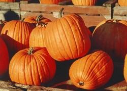 Pumpkin Day at Yerevan zoo, schoolchildren prepare dishes for animals