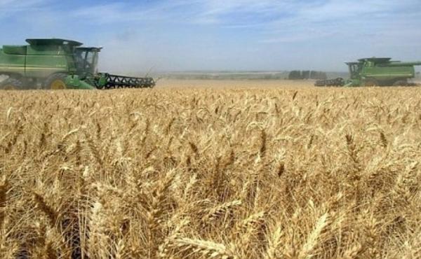 Վրաստանի կառավարությունը զիջել է. հացահատկի փոխադրումն ավտոտ....