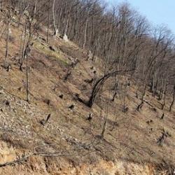 Շնողի անտառներն անխնա ոչնչացվում են. 600 անօրինական հատված ծ....